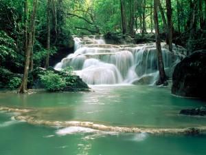 Opdag den betagende skønhed i det thailandske vildnis!